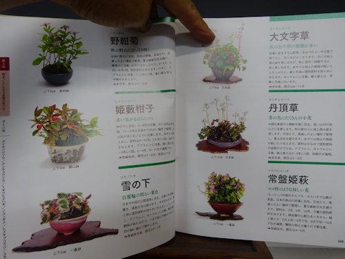 盆栽の育て方の本